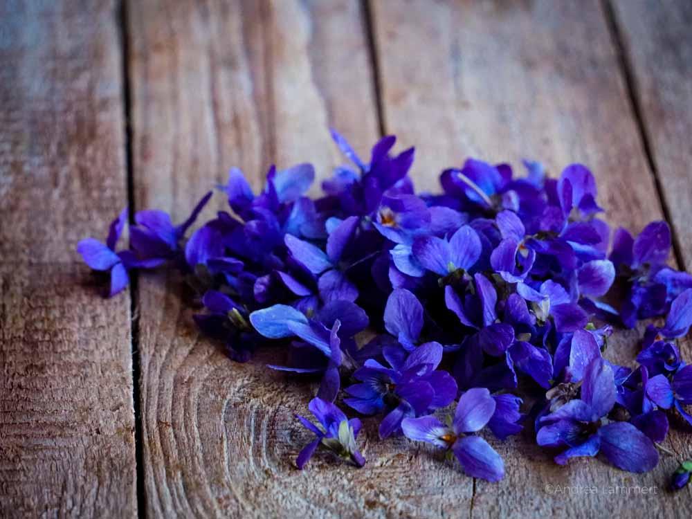Veilchenessig Rezept aus Veilchenblüten