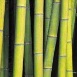 Anduze: Im Rausch des Bambus