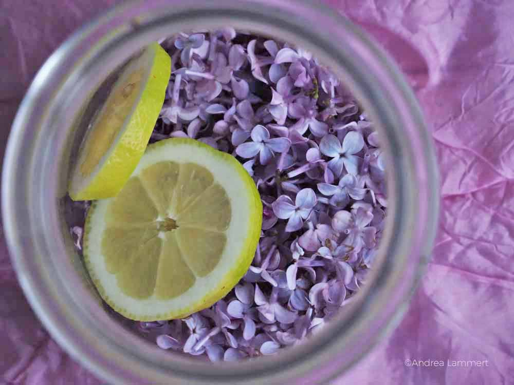 Fliederblütensirup Rezept, selbstgemacht, Sirup aus Fliederblüten