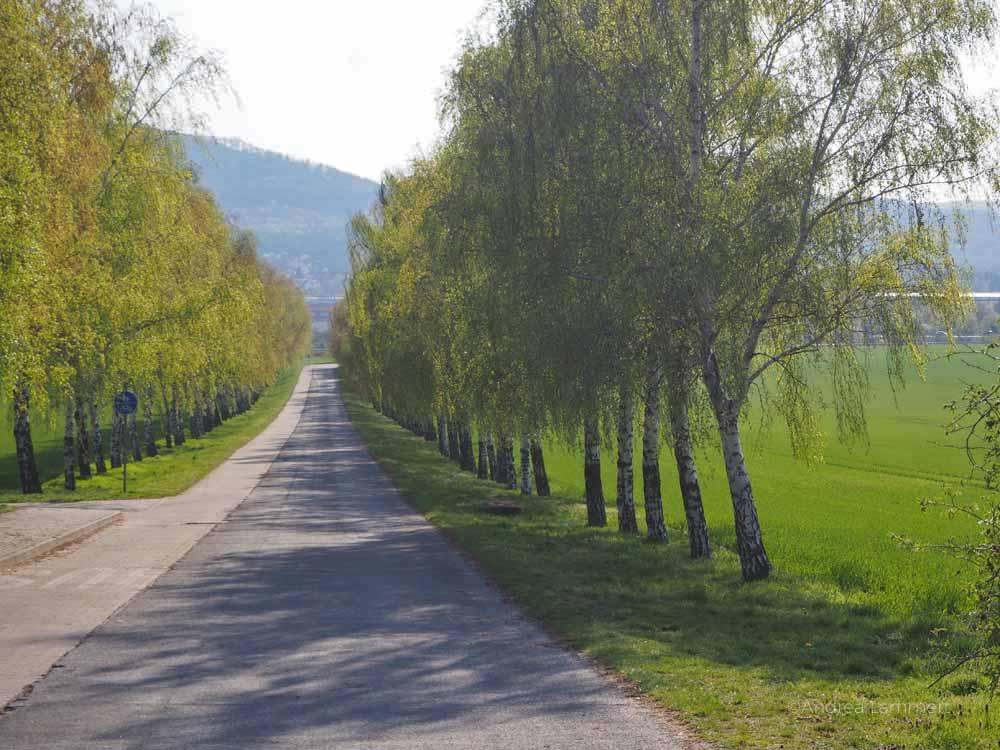 Harz mit Kindern Tipp, Burg Regenstein, Blankenburg