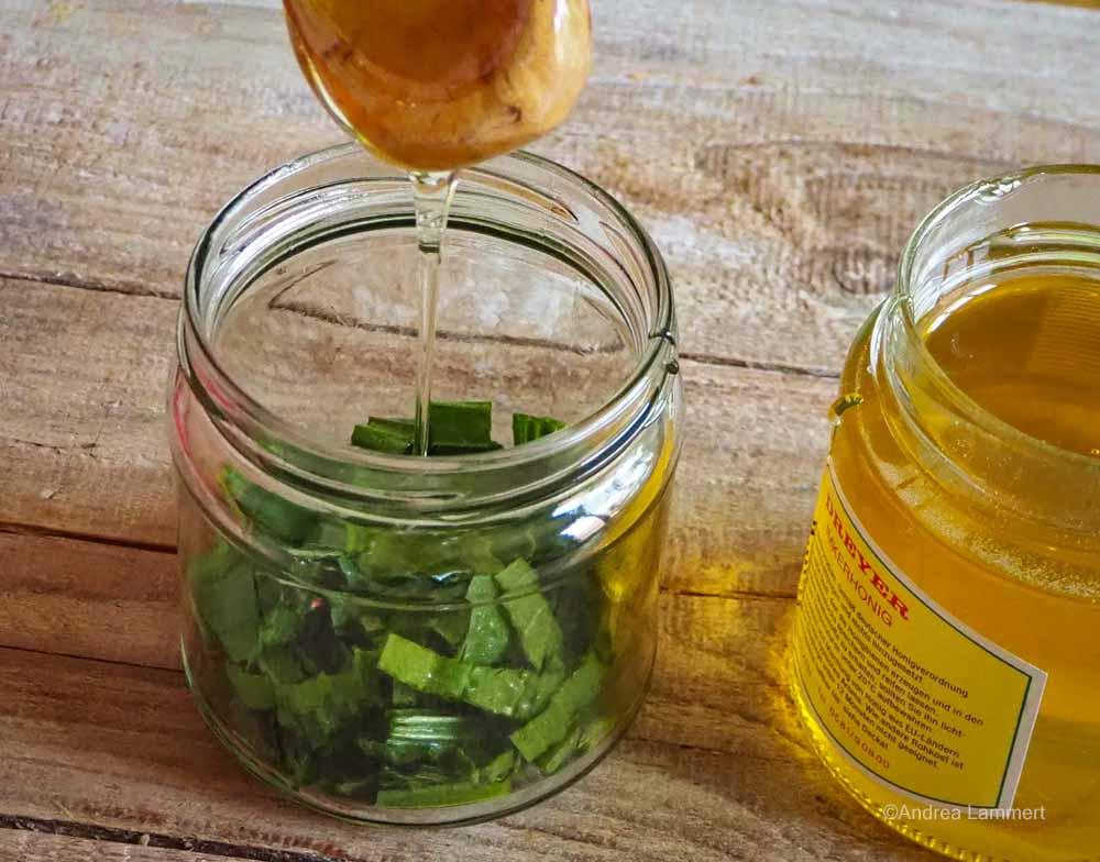 Spitzwegerich Hustensaft aus Zucker oder Honig.
