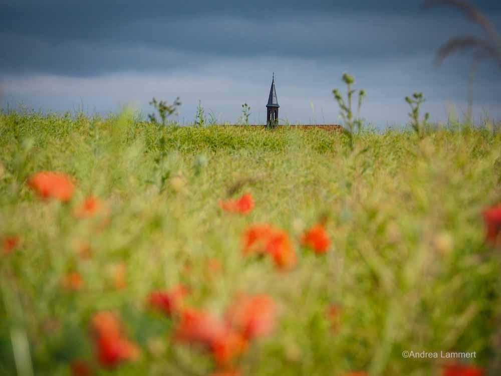 Calenberger Land, Mohnfeld