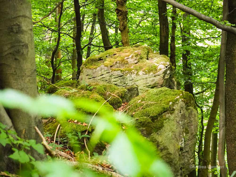 Die Felsen am Ith haben eine außergewöhnliche Form.