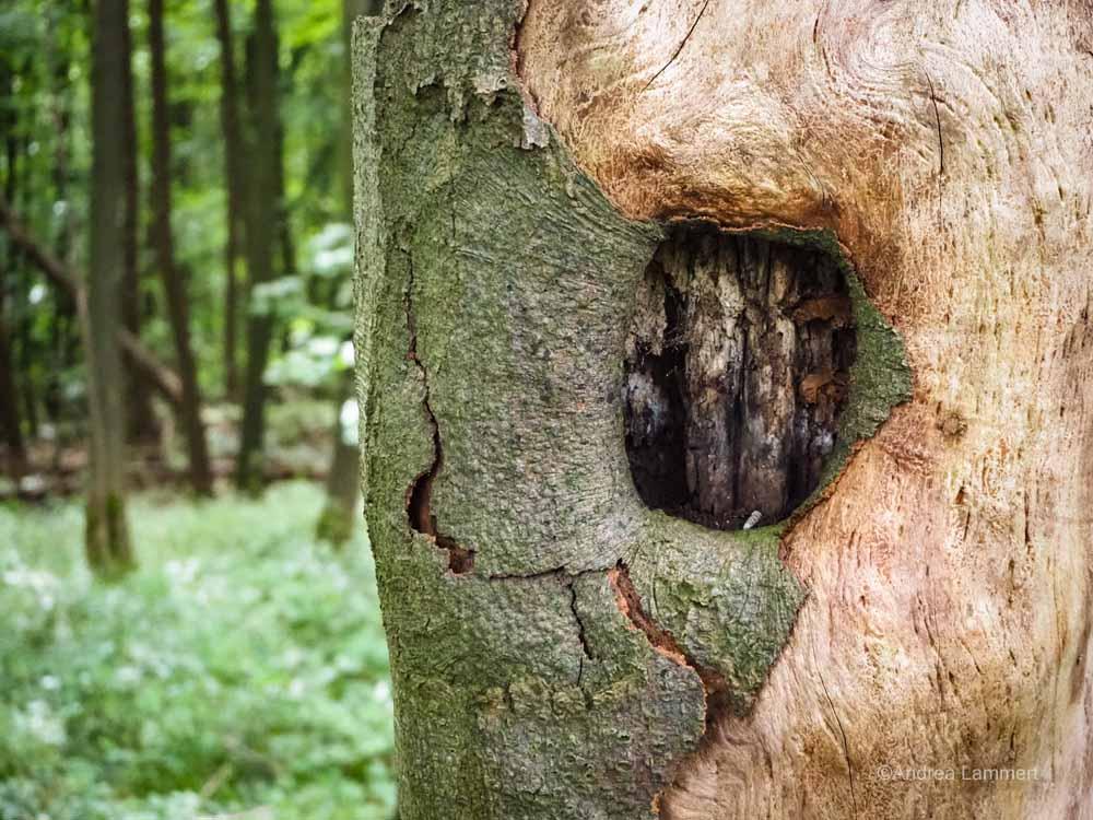 Baum am Ith-Kammweg