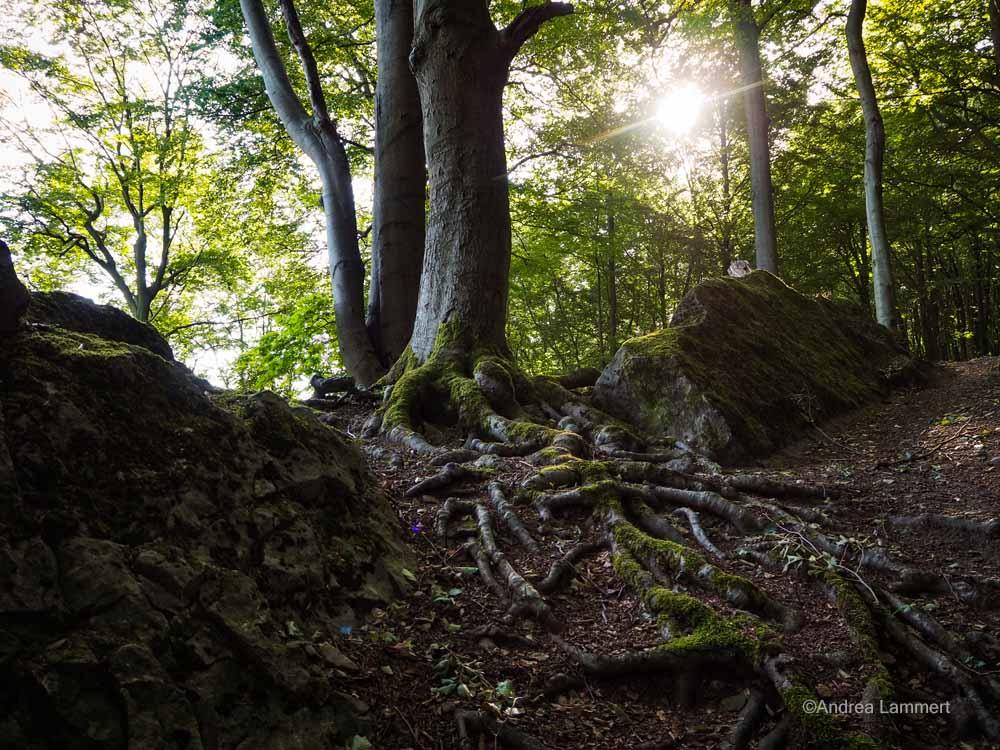 Wandern im Ith, Götterpfad bei Coppenbrügge