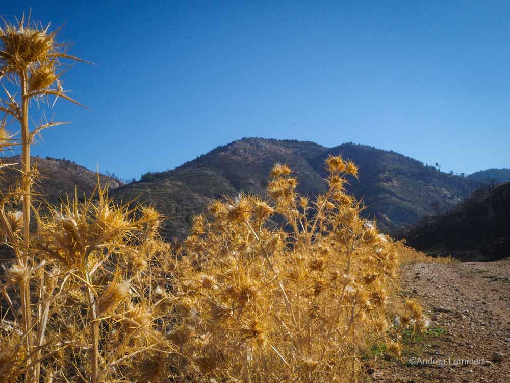 Thassos: Weg durch die Metamorfosi-Berge