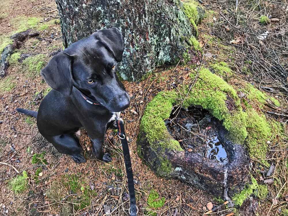 Hundeanderung Undeloh Heideblüte