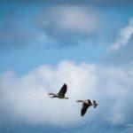 Vogelbeobachtung in Ostfriesland