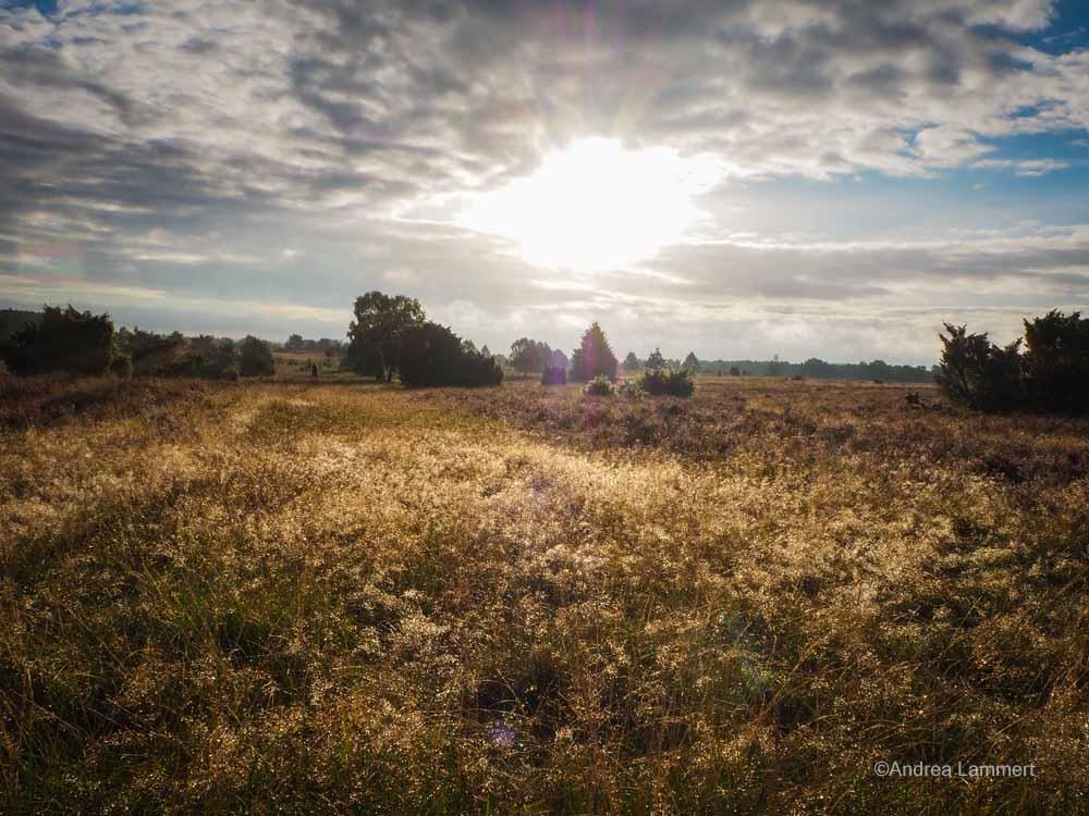 Sonnenaufgangswanderung zur Heideblüte nach Wilsede
