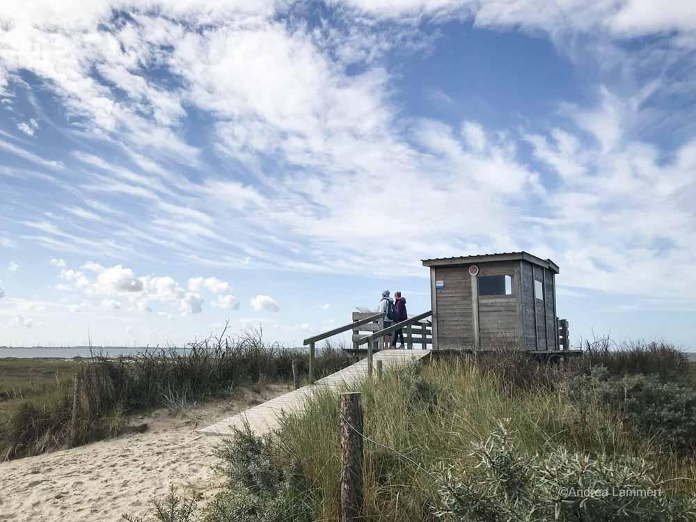 Vogelbeobachtung Ostfriesland, flinthörn auf Langeoog