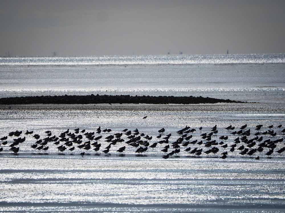 Vogelbeobachtung Ostfriesland