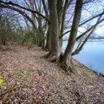 Reiherkino an den Koldinger Seen