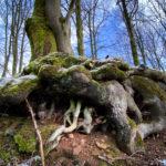 Kalletal: Wandern auf dem Hexenberg