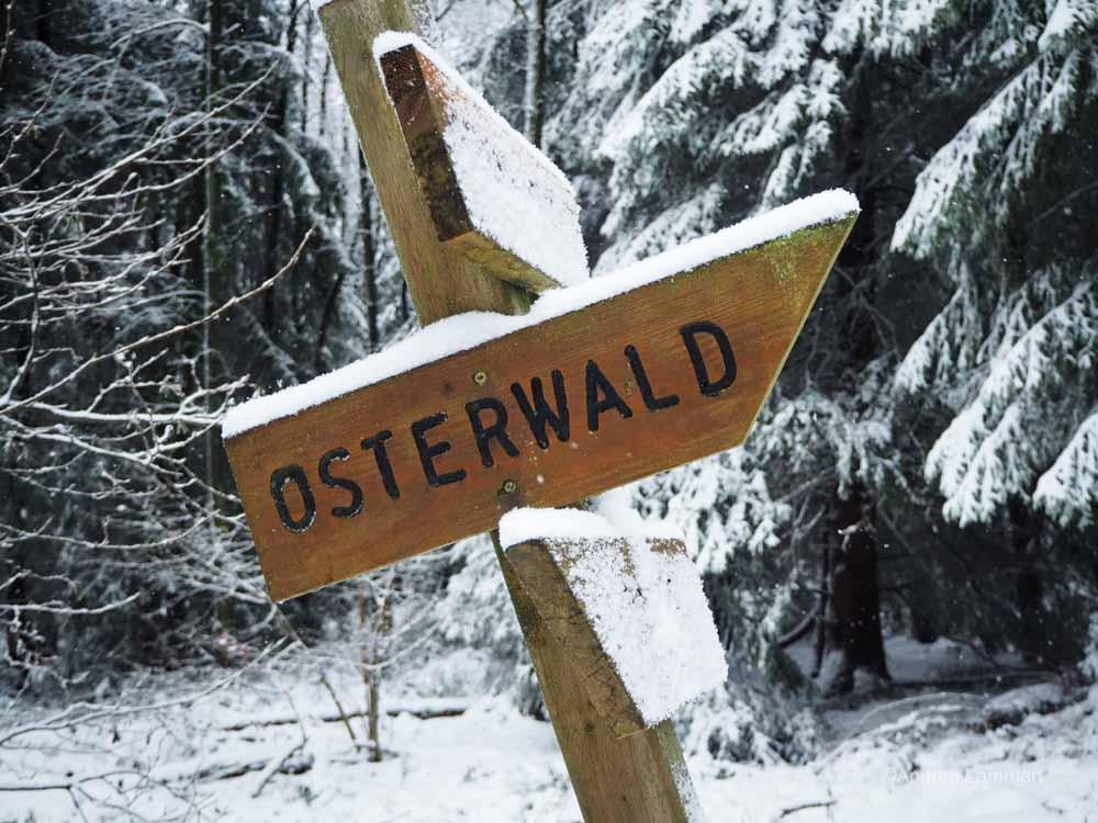 Winterwanderung im Osterwald bei Eldagsen, Hutewald