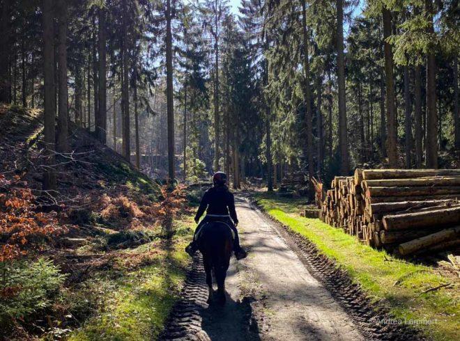 Mit dem Haflinger im Deister reiten