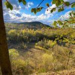 Springe: Frühlingsrunde im Osterwald