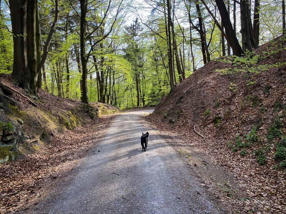 Wanderung zur Kukesburg, Altenhagen, Springe