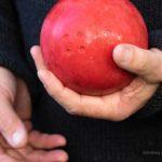 Ostfrieslands Volkssport: Boßeln